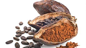 Cocoa Bean Powder Line