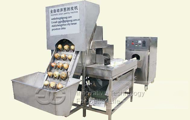 Oion Peeling And Root Cutting Machine