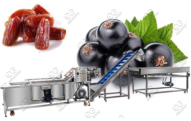 Automatic Dates Cleaning Machine|Jujube Washing Drying Line