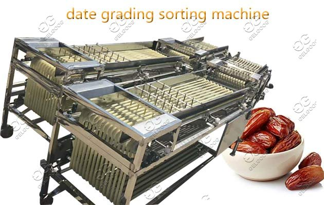 Industrial Palm Date Sorting Grading Machine Price