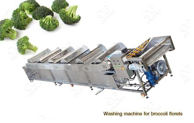 Vegetable Broccoli Florets Washing Machine For Industrial Use