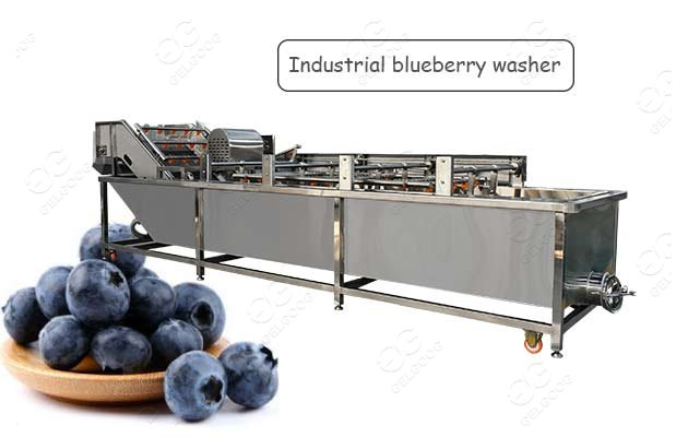 Automatic Fruit Blueberry Washing Bubble Type Machine Price