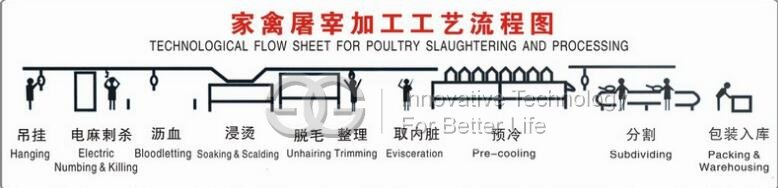 chicken slaughtering line