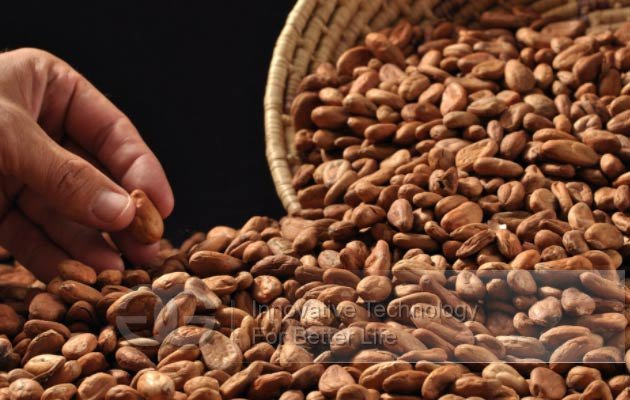 cocoa bean processing equipment