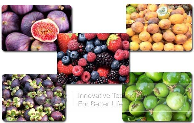 fruit size grader price