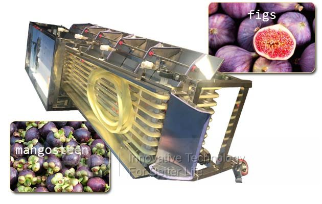 fruit figs grading machine price