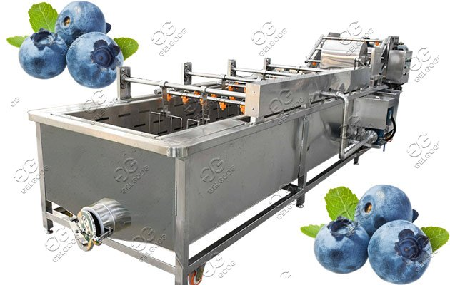 blueberry cleaning machine supplier