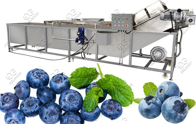 blueberry washing drying machine