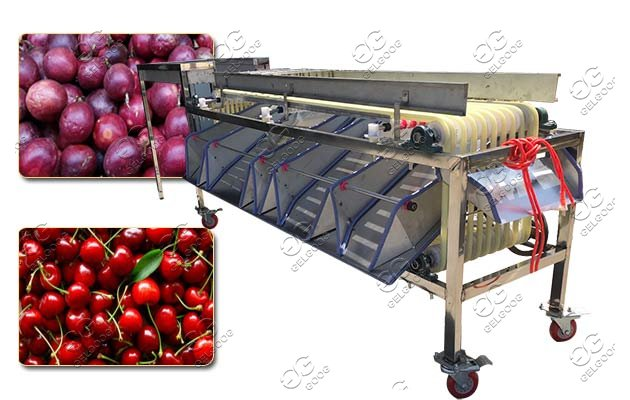 berries sorting machine price