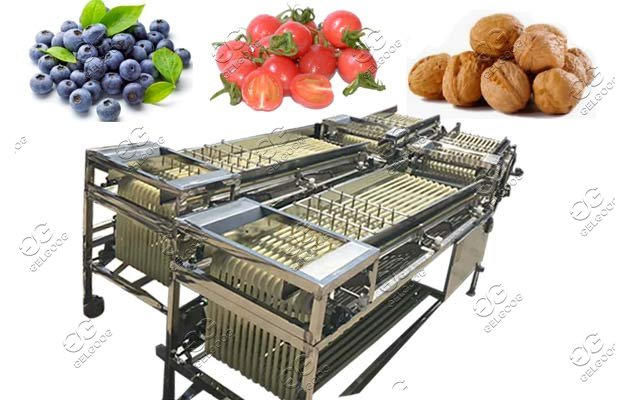 fruit olive grading machine