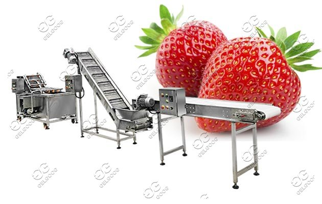 commercial fruit vegetable washing machine