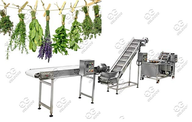 commercial leafy vegetable cleaing machine