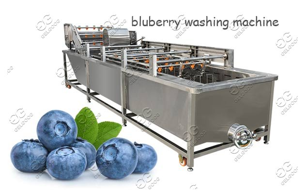 fruit bluberry washing machine