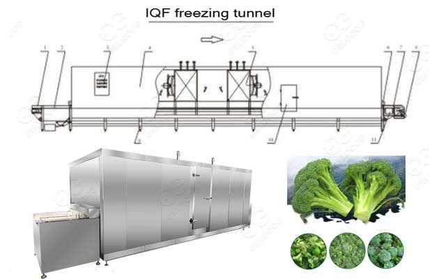 IQF freezing machine