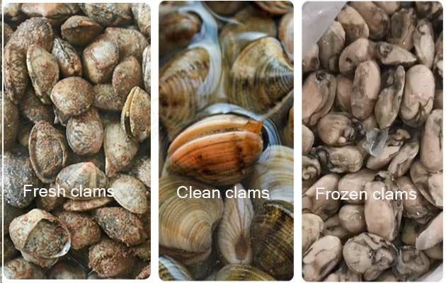 frozen clam production line