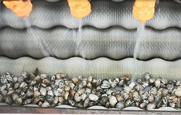 clam processing machine