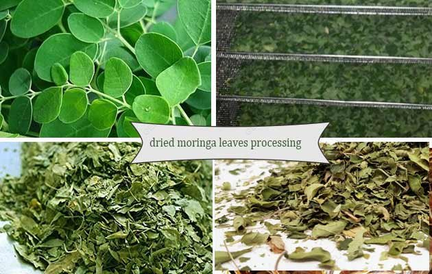 dried moringa leaf making machine