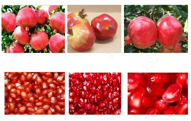 pomegranate peeling machine price