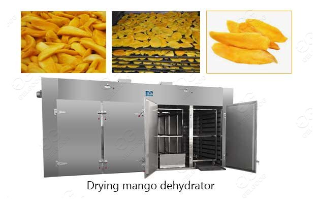 drying mango dehydrator