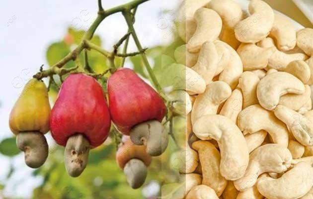 cashew shelling machine line