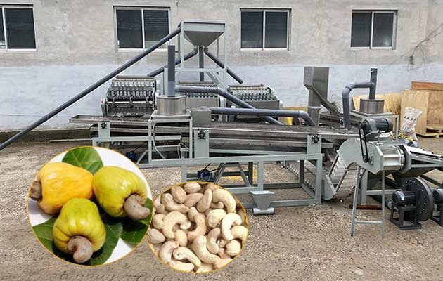 cashew processing plant for sale